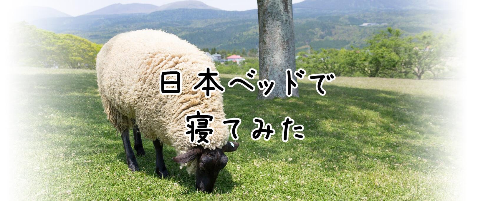 日本ベッドの「ピロートップシルキーポケット」で1週間寝てみた結果とその後のイメージ画像